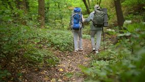 Rear view of couple of aged tourists walking in the wood. Follow the route. Rear view of a pleasant couple of aged tourists trying Nordic walking and going along stock footage
