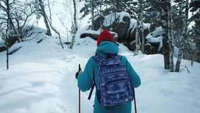 FOLLOW Young female hiking with a backpack in beautiful winter forest. uses sticks for Nordic walking. FOLLOW Young female hiking with a backpack in beautiful stock footage