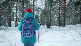 FOLLOW Young female hiking with a backpack in beautiful winter forest. uses sticks for Nordic walking. FOLLOW Young female hiking with a backpack in beautiful stock video footage
