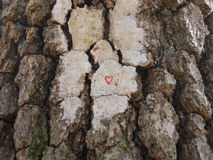 Follow your heart. A red heart scribbled on a trail blaze painted on the bark of a tree Royalty Free Stock Photo