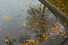 Followed by rain   in autumn puddle. Stock Image