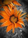 Follower in the garden. Follower garden orange spider natur royalty free stock photos