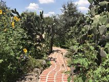 Following the Brick Road in a Mexican ranch. The long and winding road takes you on a nature walk in this Mexican ranch Royalty Free Stock Photography