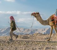 Following. Cames following its master to desert Royalty Free Stock Images