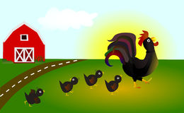 Following father / leader. Rooster & chicks: Following father or leader concept Stock Photos