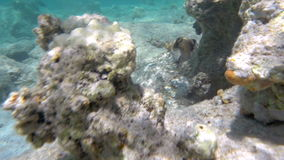 Following the fish swimming in coral reef. Slow motion underwater shot of a fish swimming in coral reef. Sunlight coming through the water and making it and stock video footage