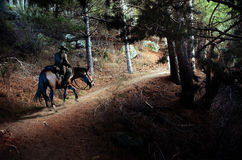 Following the path. Cowboy on his horse taking a path into the forest  in the mountains Stock Image
