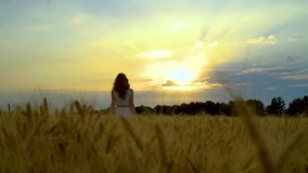 Following shot of woman walking in wheat field at sunset with sky on background stock footage