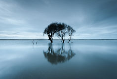 Folly Beach Charleston South Carolina Lone Tree Reflection Stock Images
