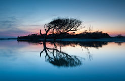 Folly Beach County Park Lone Tree Reflection at Sunset Charleston Royalty Free Stock Photos