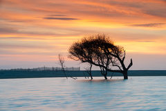 Folly Beach County Park Lone Tree Sunrise Stock Photos