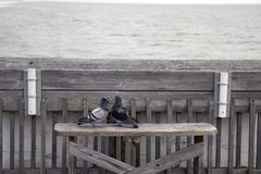 Folly Beach South Carolina, February 17, 2018 - two pigeons sitting on a bench on fishing pier staring at each other.  Stock Images