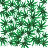 Foloaje de la marijuana ilustración del vector