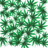 Foloaje de marijuana Photo stock