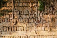 Foluje ściana korzenie Zdjęcia Royalty Free