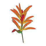 Folwer di Heliconia Immagine Stock