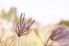 Folwers de la hierba imagen de archivo libre de regalías