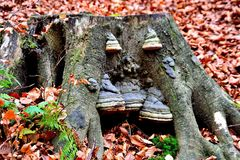 Fomesfomentarius, houten sponspaddestoel, foto royalty-vrije stock foto's