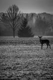 fon jeleniej czujna whitetail kochającą mamę Fotografia Royalty Free