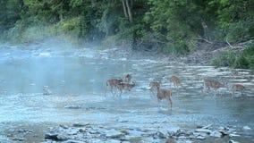 fon jeleniej czujna whitetail kochającą mamę zdjęcie wideo