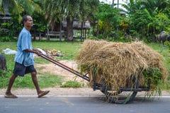 Fonctionnement asiatique d'agriculteur Photos stock