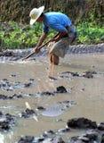 Fonctionnement chinois de fermier Photos stock