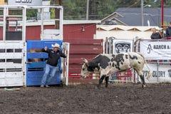 Fonctionnement d'un taureau Photographie stock libre de droits