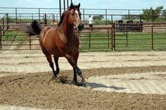 Fonctionnement de cheval Photographie stock