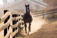 Fonctionnement de cheval Image stock