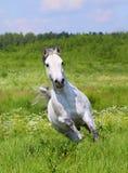 Fonctionnement de cheval blanc photos libres de droits