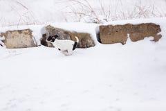 Fonctionnement de chiot dans la neige images libres de droits