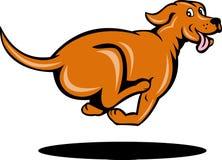 Fonctionnement de crabot de chien d'arrêt de flèche indicatrice Images libres de droits