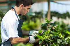 Fonctionnement de jardinier images libres de droits