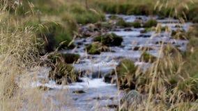 Fonctionnement de livet de rivière lisse et bas dans le glenlivet pendant septembre Parc national de Cairngorms banque de vidéos