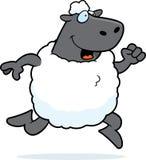 Fonctionnement de moutons Photos stock