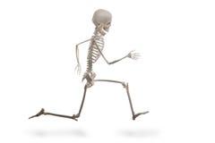 Fonctionnement de squelette d'isolement sur le blanc Photos stock