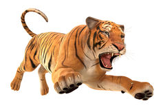 Fonctionnement de tigre Images stock