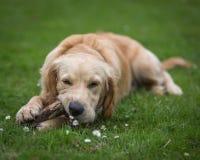 Fonctionnement et jouer de chien Image stock