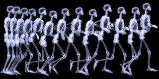 Fonctionnement humain de skelegon image stock