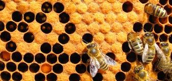 Fonctionner d'abeilles Photographie stock libre de droits