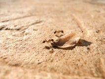 Fonctionner de fourmis Photo stock