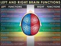 Fonctions gauches et droites de cerveau Photo libre de droits