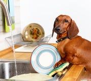 Fonctions préférées de ménage de jeune chien photos libres de droits