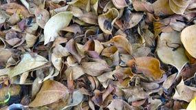 Fond à feuilles caduques clair image stock