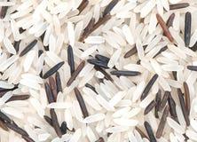 Fond à grain long d'instruction-macro de riz Photographie stock libre de droits