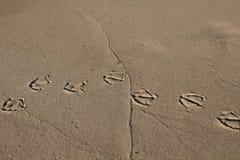 Fond à sable jaune de texture avec des empreintes de pas de pélican image stock