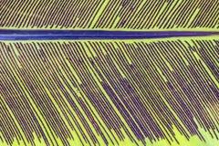 Fond éclairé à contre-jour par épine de feuille Image stock