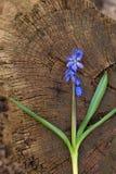 Fond, écorce en bois, fleur Photo stock