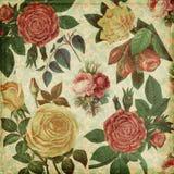 Fond élégant minable de roses botaniques de cru Photo libre de droits