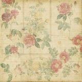 Fond élégant minable de roses botaniques de cru Photos stock